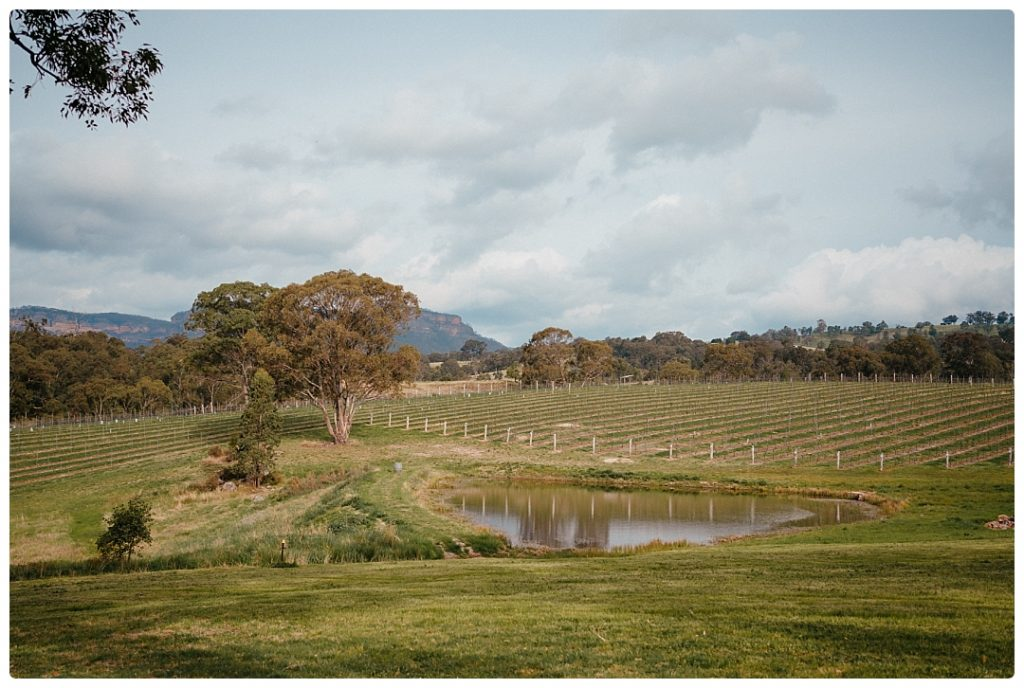 blue-mountains-winery-scene